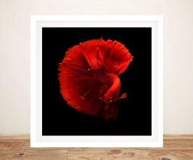 Framed Crimson Betta Abstract Canvas Print
