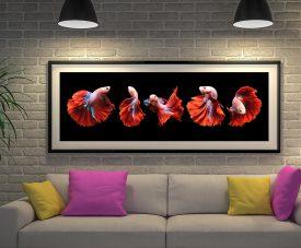Framed Panoramic Siamese Fighting Fish Art