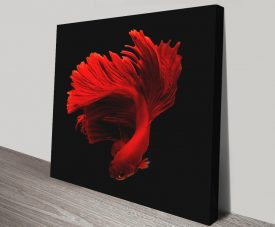 Red Siamese Fish Colourful Abstract Art