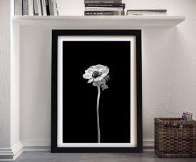 Framed Anemone Coronaria Monochrome Art